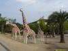 expo05-giraffe