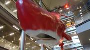 Hep 5 whale